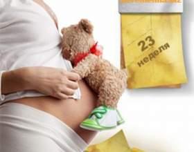 23 Тиждень вагітності: що відбувається з малюком і з мамою фото