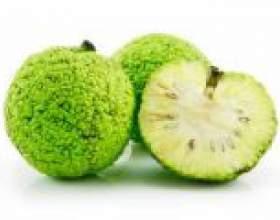 Адамове яблуко: настойка для суглобів фото