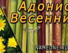 Адоніс весняний і його лікувальні властивості, застосування, протипоказання фото