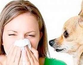 Алергія на тварин, у дітей і у дорослих фото
