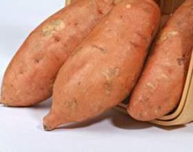 Батат, або солодка картопля - опис, корисні властивості, застосування фото