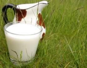 Бруцельоз: коли стакан молока може бути небезпечним фото