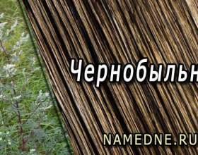 Чорнобиль - лікувальні властивості фото