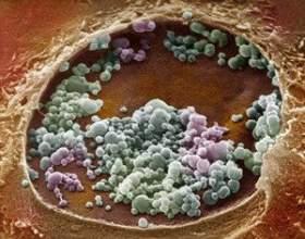 Герпес генітальний: шляхи зараження, ознаки захворювання, методи лікування фото