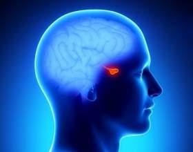 Гормони гіпофіза: функції і відхилення фото