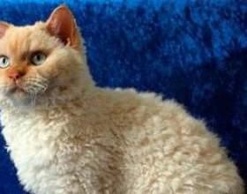 Кішки відновлюють імунодефіцит у людини! фото