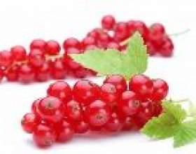 Червона смородина: властивості і користь червоної смородини фото
