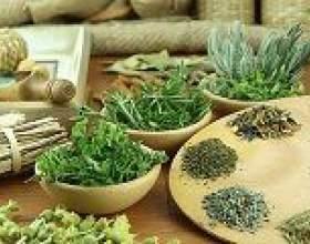 Лікування гіпертонії лікарськими рослинами фото