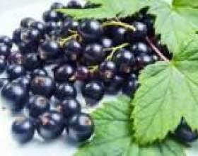 Листя чорної смородини: лікувальні властивості і протипоказання фото