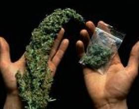 Медики прийшли до висновку: залежність від марихуани не лікується фото