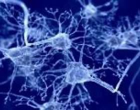 Допомога особливих нейронів людського мозку при сприйнятті смаку фото