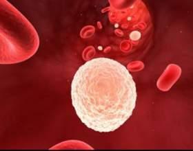 Підвищено лейкоцити в сечі при вагітності фото