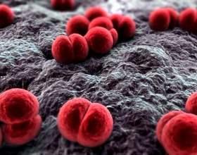 Профілактика і лікування менінгококової інфекції фото