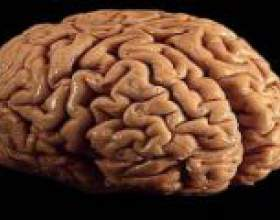 Рак головного мозку - причини, діагностика, прогноз фото