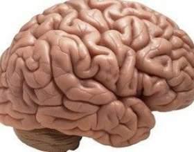 Ризикований людина має зовсім іншу активність мозку! фото
