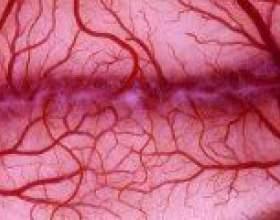 Судинорозширювальні препарати - засоби для поліпшення кровообігу фото