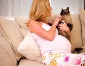 Токсоплазмоз при вагітності фото