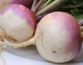 Турнепс (насіння турнепсу) - опис, цілющі властивості, застосування фото