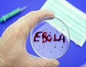 Вченим вдалося розробити ефективну вакцину від еболи фото