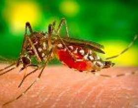 Вакцина проти малярії допоможе захиститися від захворювання на рак фото