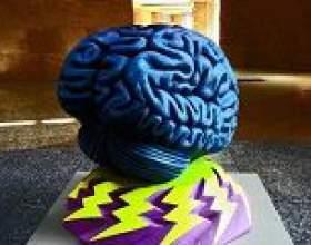 Чи знаєте ви, як головний мозок пов`язаний з почуттям щастя? фото