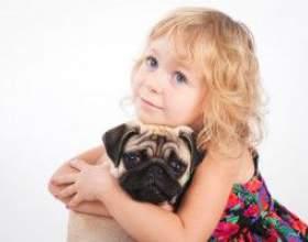 Зоонози, або чим можна заразитися від домашніх тварин фото